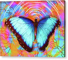 Butterfly Dreams Acrylic Print by Robert Ball