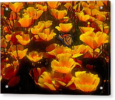 Butterfly Effect Acrylic Print by Robby Donaghey
