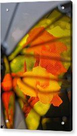 Butterfly Florals  Collection D Acrylic Print by Debra     Vatalaro