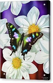 Butterfly Flowers Acrylic Print by JQ Licensing