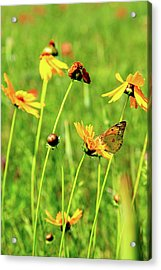 Butterfly Freedom Acrylic Print by Toni Hopper