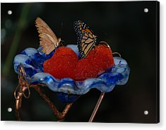 Acrylic Print featuring the photograph Butterfly Fruit by Richard Bryce and Family