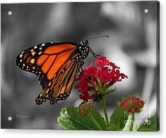 Acrylic Print featuring the photograph Butterfly Garden 01 - Monarch by E B Schmidt
