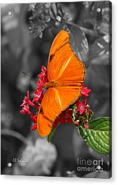 Acrylic Print featuring the photograph Butterfly Garden 16 - Julia Heliconian by E B Schmidt