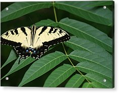 Butterfly Acrylic Print by Heather Green