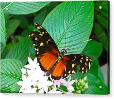 Butterfly House  Acrylic Print