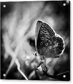 Butterfly In Black And White Acrylic Print