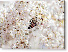 Acrylic Print featuring the photograph Butterfly In Cherry Blossom by Charline Xia