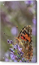 Acrylic Print featuring the photograph Butterfly In Close Up by Patricia Hofmeester