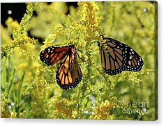 Butterfly In Fall  Acrylic Print