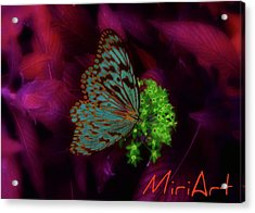 Acrylic Print featuring the photograph Butterfly In Fusia by Miriam Shaw