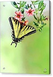 Butterfly In My Garden Acrylic Print