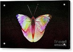 Butterfly In Retro  Acrylic Print by Manjot Singh Sachdeva
