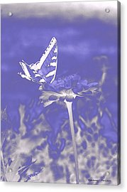 Butterfly In The Mist Acrylic Print