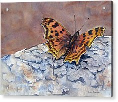 Butterfly-in-the-old-growth-forest Acrylic Print by Nancy Newman
