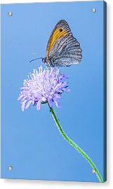 Acrylic Print featuring the photograph Butterfly by Jaroslaw Grudzinski