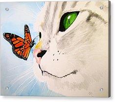 Butterfly-kissed Grey Tabby Acrylic Print