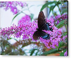 Butterfly Kisses Acrylic Print by JAMART Photography