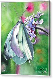 Butterfly Kisses Acrylic Print by Maya Marcotte