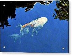 Butterfly Koi In Blue Sky Reflection Acrylic Print