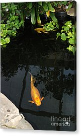 Butterfly Koi In Pond Acrylic Print