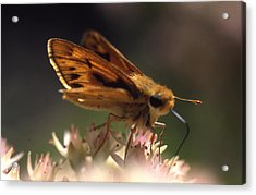 Butterfly-lick Acrylic Print