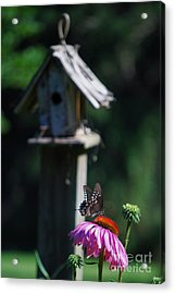 Acrylic Print featuring the photograph Butterfly by Lila Fisher-Wenzel