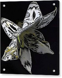 Acrylic Print featuring the photograph Butterfly Lily by Carolyn Repka