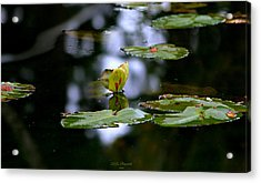 Butterfly Lily Pad Acrylic Print