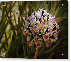 Butterfly Magnet Acrylic Print