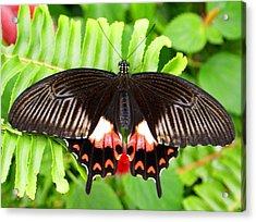 Butterfly Maze Acrylic Print by Jean Haynes