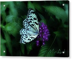 Acrylic Print featuring the photograph Butterfly by Miriam Shaw