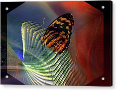 Acrylic Print featuring the photograph Butterfly Morphing by Irma BACKELANT GALLERIES