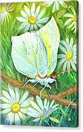 Butterfly Acrylic Print by Natalie Berman