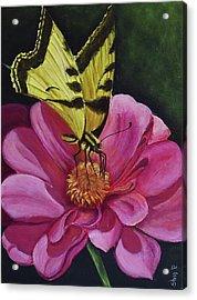 Butterfly On A Pink Daisy Acrylic Print by Silvia Philippsohn