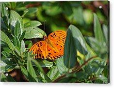 Butterfly On A Sunny Day Acrylic Print