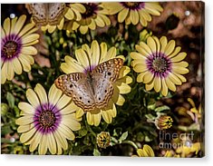 Butterfly On Blossoms Acrylic Print