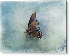 Acrylic Print featuring the photograph Butterfly On Blue by Sandy Keeton