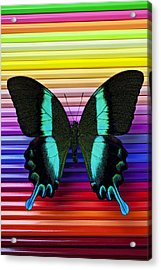 Butterfly On Colored Pencils Acrylic Print by Garry Gay