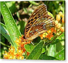 Butterfly On Flower Acrylic Print by Margaret G Calenda