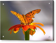 Acrylic Print featuring the photograph Butterfly On Flower by Willard Killough III