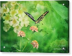 Butterfly On Lantana Montage Acrylic Print