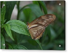 Acrylic Print featuring the photograph Butterfly On Leaf by Cathy Harper