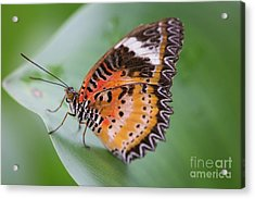 Acrylic Print featuring the photograph Butterfly On The Edge Of Leaf by John Wadleigh