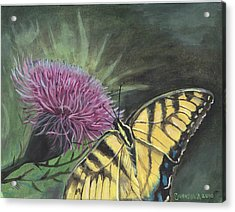 Butterfly On Thistle 2010 Acrylic Print by Cheryl Johnson