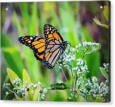 Butterfly On Wildflower Acrylic Print