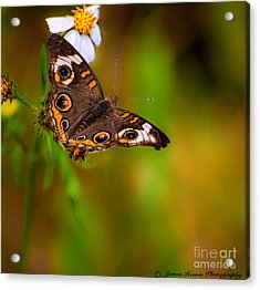 Butterfly One Acrylic Print