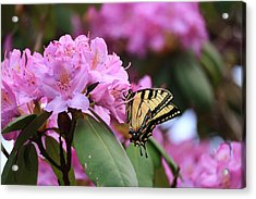 Butterfly Paradise Acrylic Print