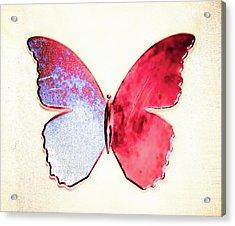 Butterfly Acrylic Print by Paul Jarrett
