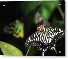 Butterfly Perfect Acrylic Print by JAMART Photography